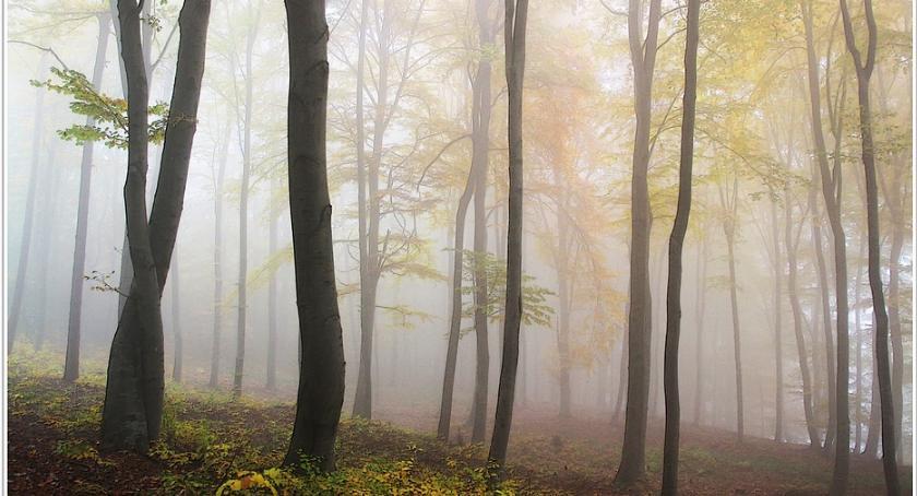 Bezpieczeństwo, Zwłoki kobiety Lesie Bielańskim wydarzyło naprawdę - zdjęcie, fotografia