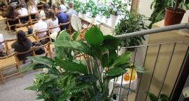 Ambasador podarował rośliny
